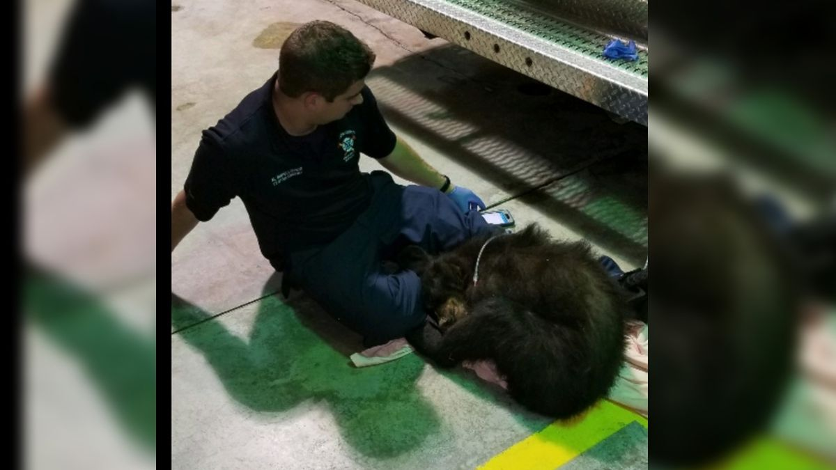 This local fire station treated a very unusual patient: A bear cub hit by a car