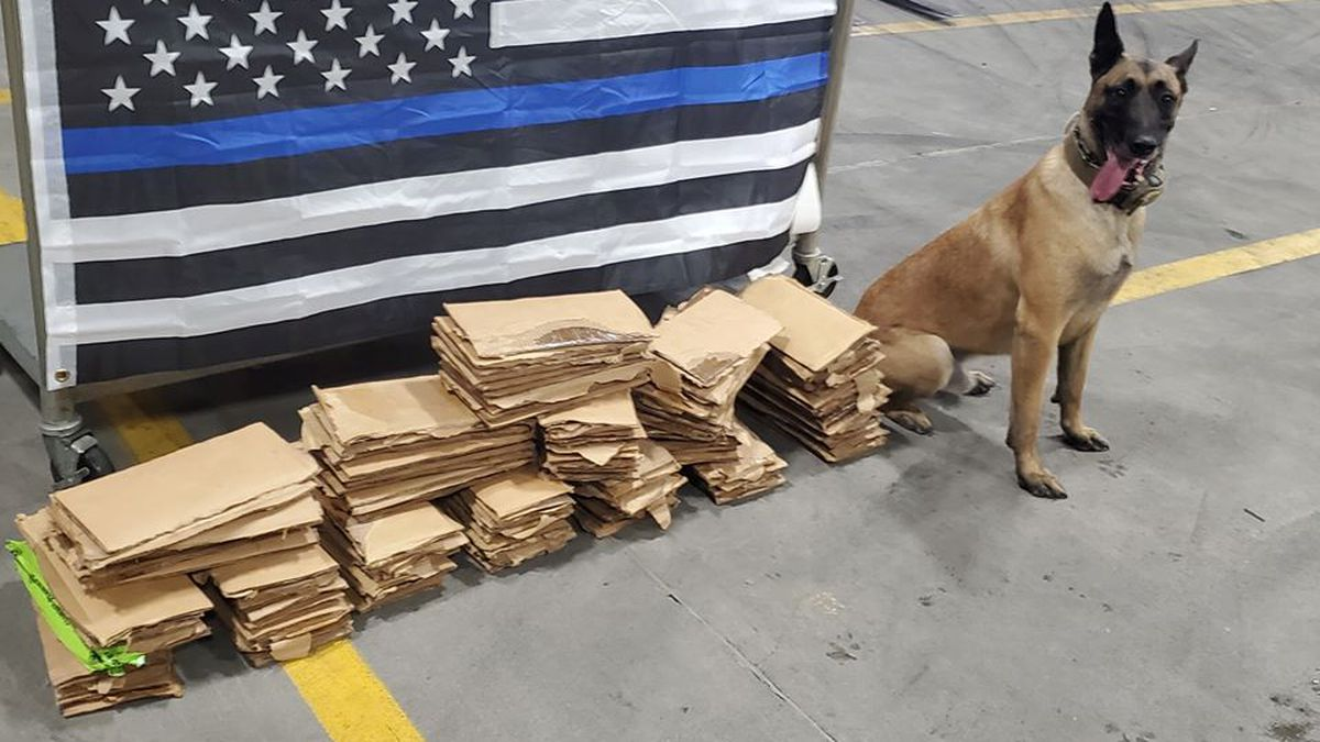 Police K9 sniffs out $1.7 million worth of cocaine at Savannah port