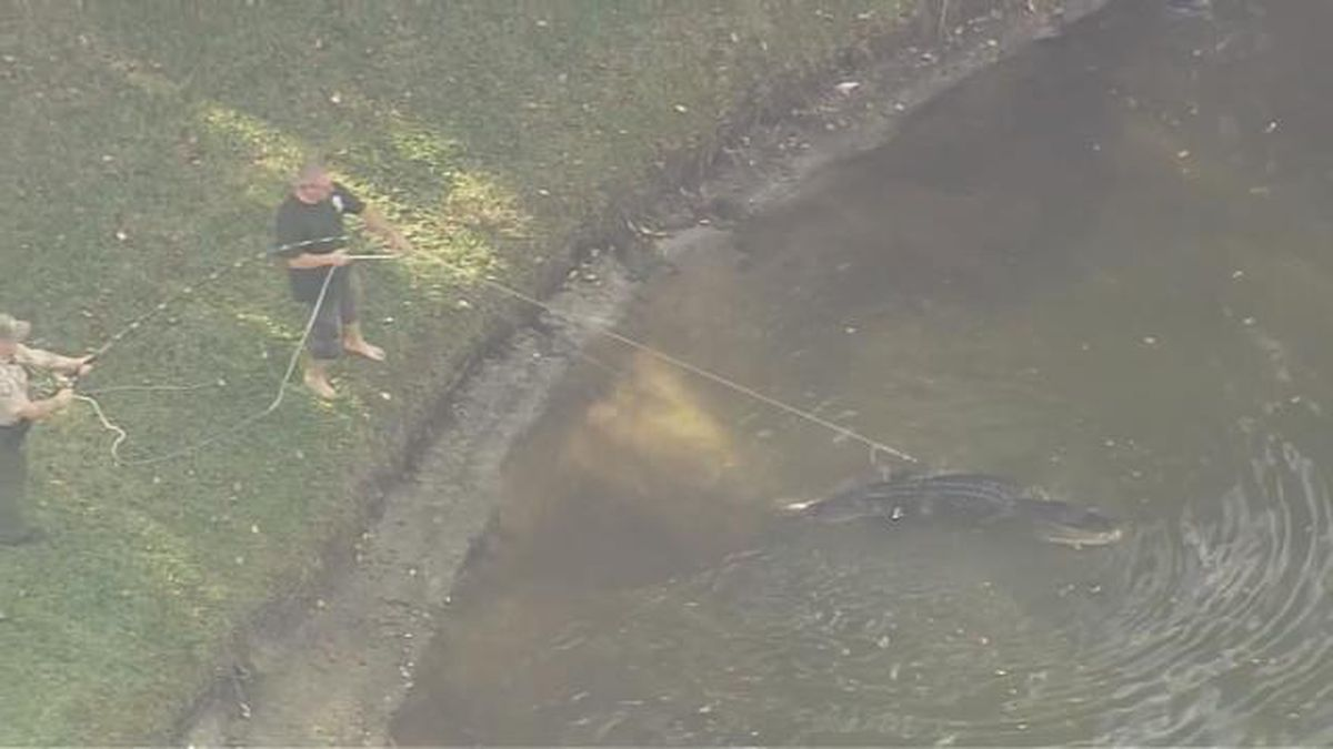 'There is a gator eating a man!' 911 calls reveal panic during alligator attack
