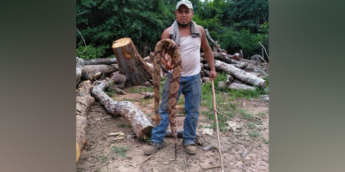 3-foot pregnant copperhead killed in Cherokee County