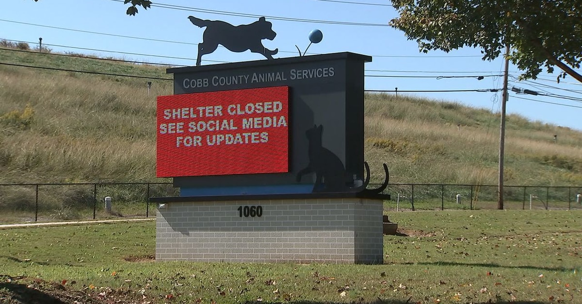 Vets ID mysterious illness that caused animals to get sick at local animal shelter
