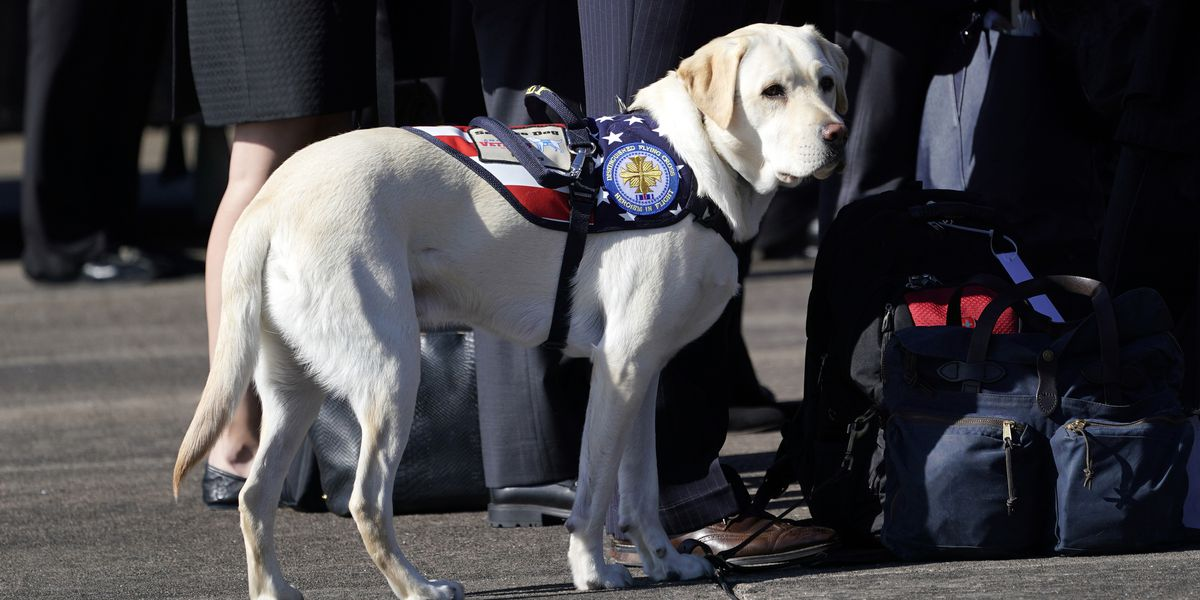 George H.W. Bush's service dog, Sully, starts new assignment at military hospital