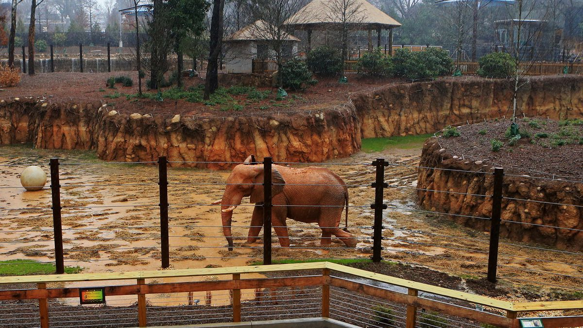 Zoo Atlanta announces its reopening date
