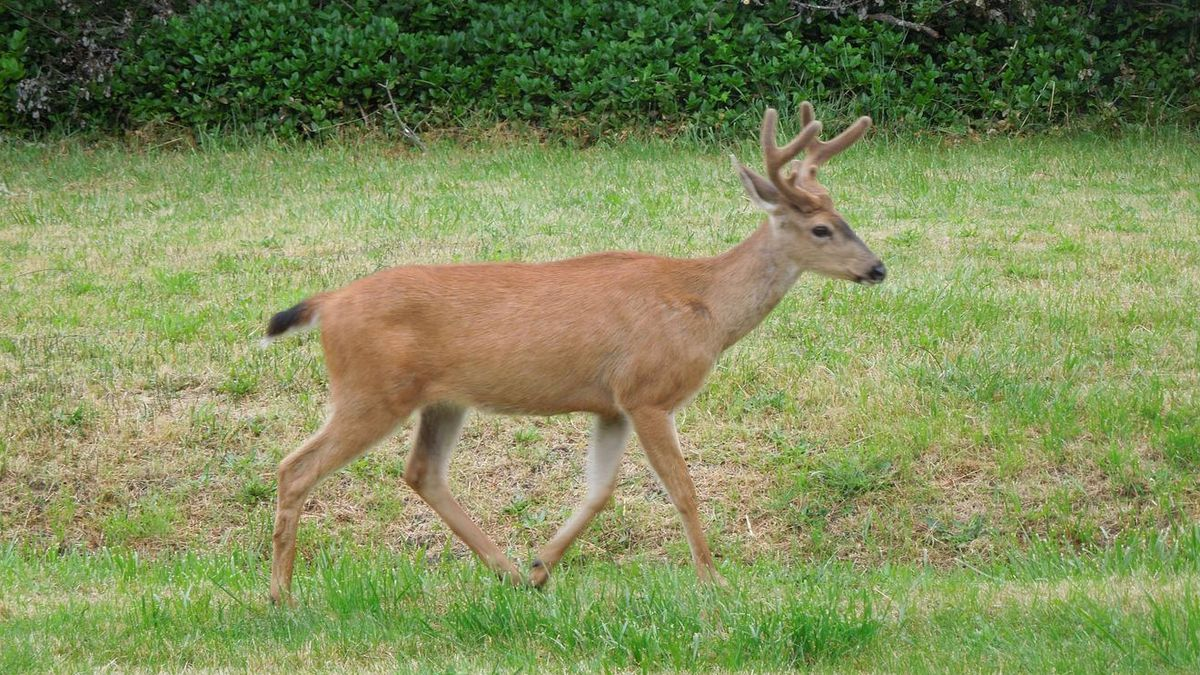 Deer abuse video that went viral ends in court