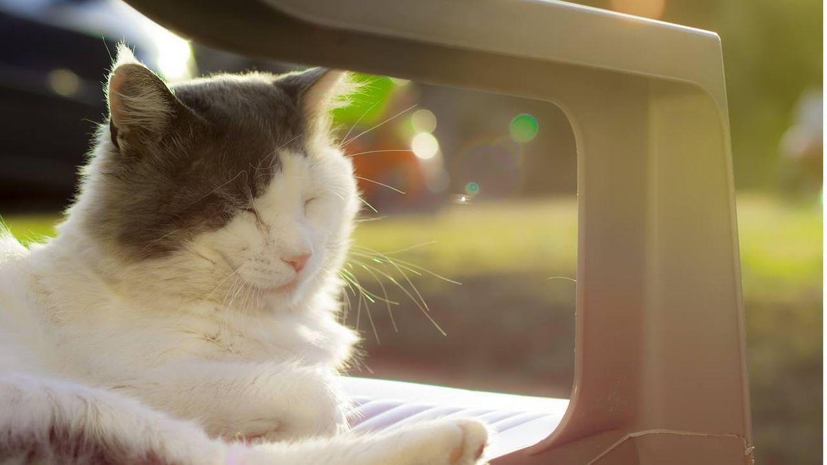 Arizona family seeks missing cat that had blow dart through snout