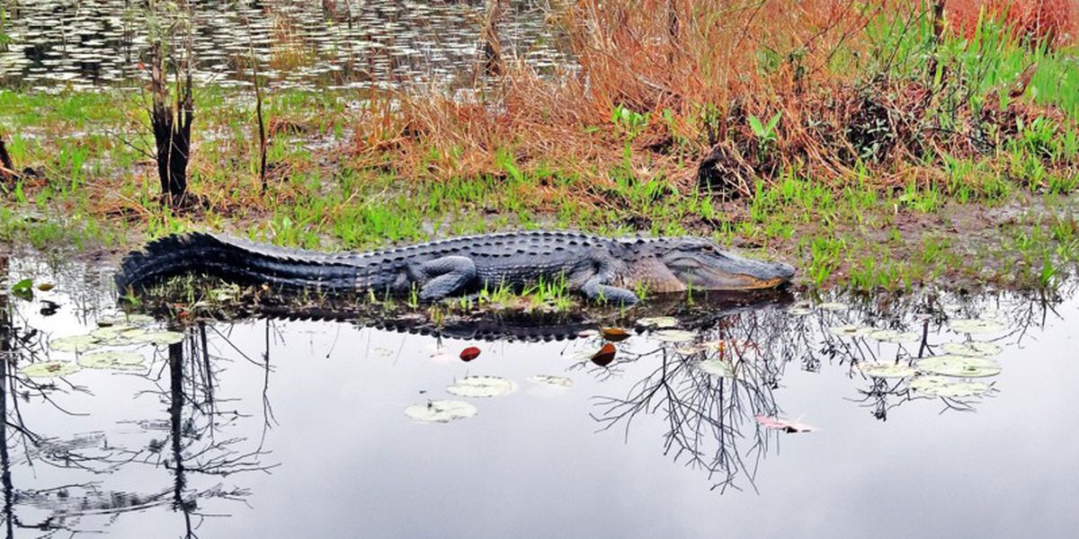 Plan your trip to the Okefenokee swamp