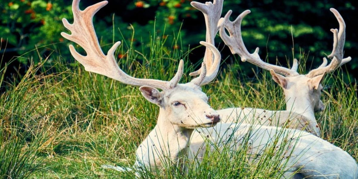 Hunter stunned at sighting of rare 12-point albino buck, calls it a 'once-in-a lifetime experience'