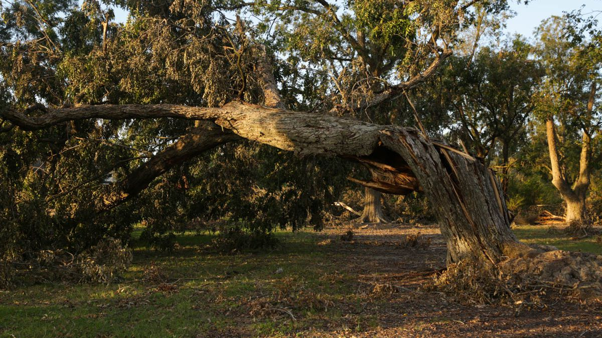 Georgia pecan growers, other farmers move a step closer to disaster aid