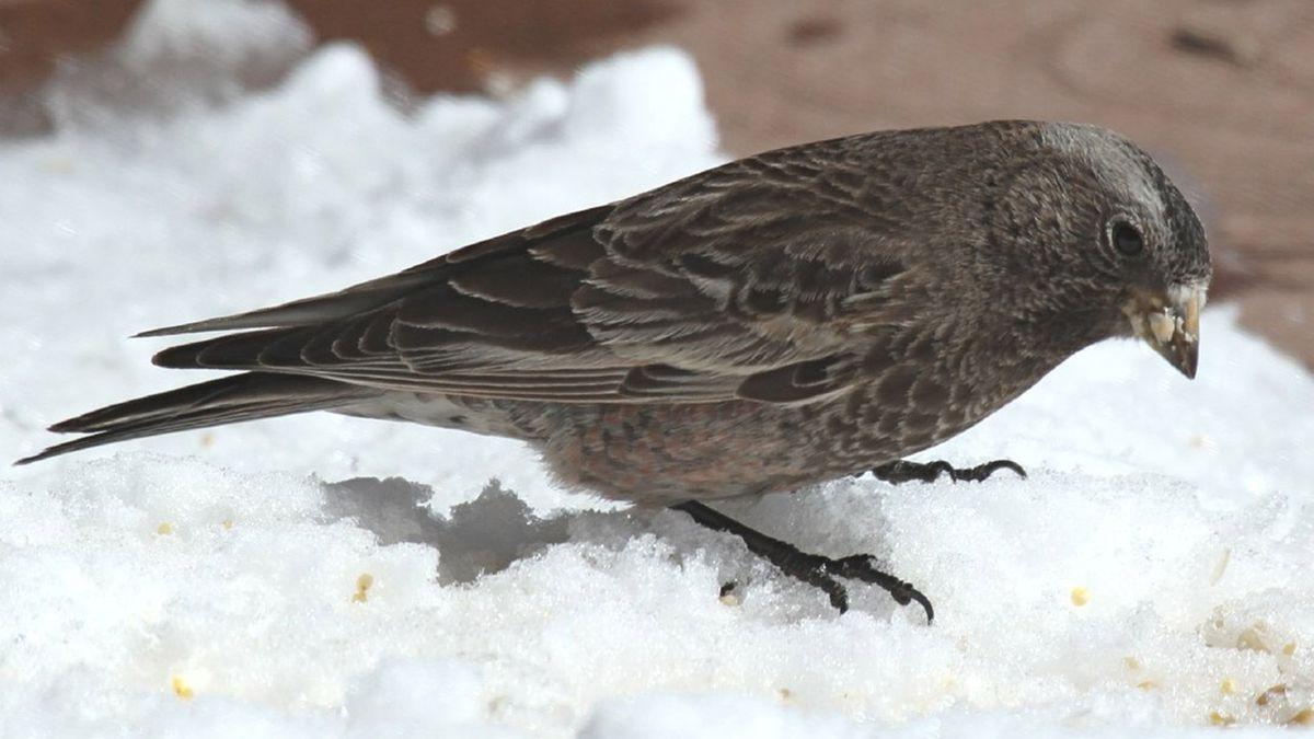 33 live birds smuggled into U.S. in curlers; passenger arrested at JFK
