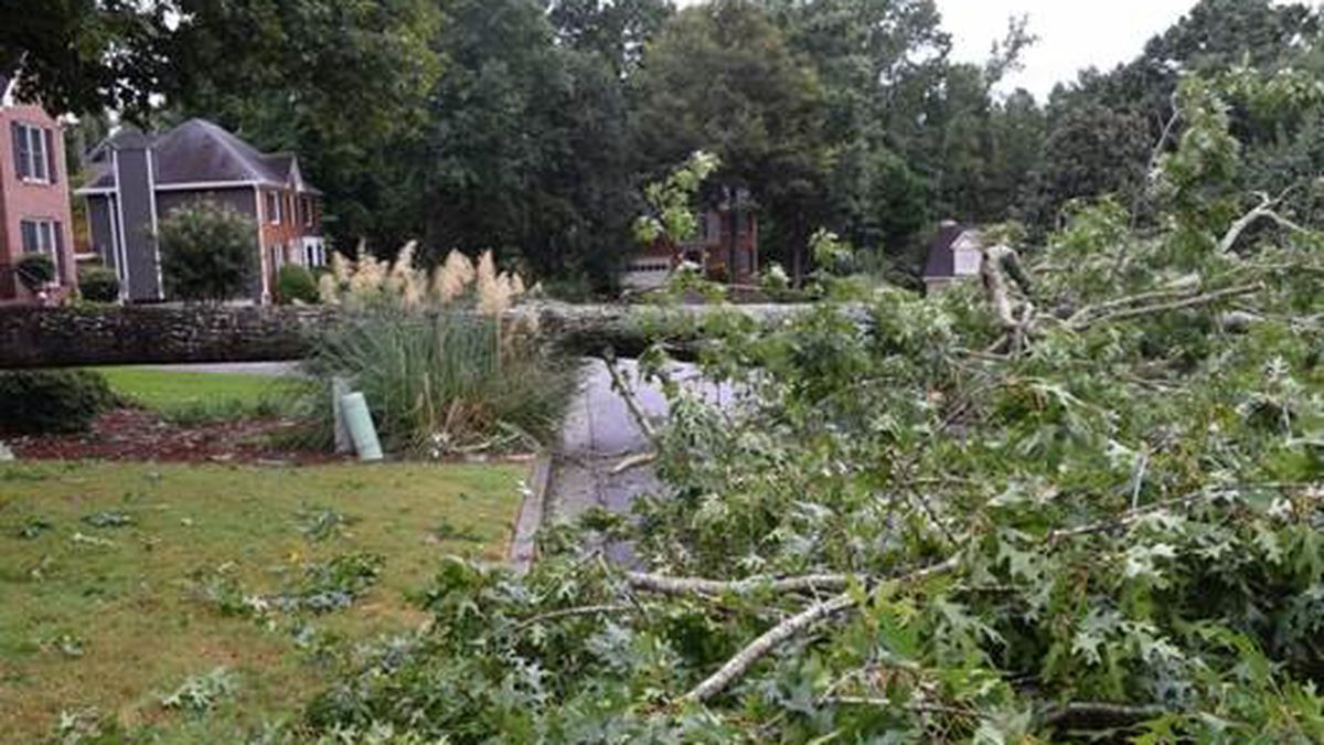 Snellville woman killed by falling tree as she walked her dog