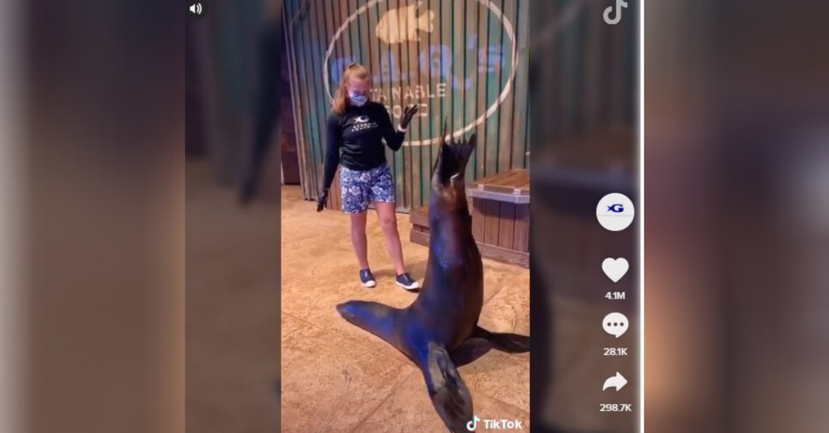 Sea Lion's Hilarious Tik Tok Challenge Video Viewed By Over 23 Million People
