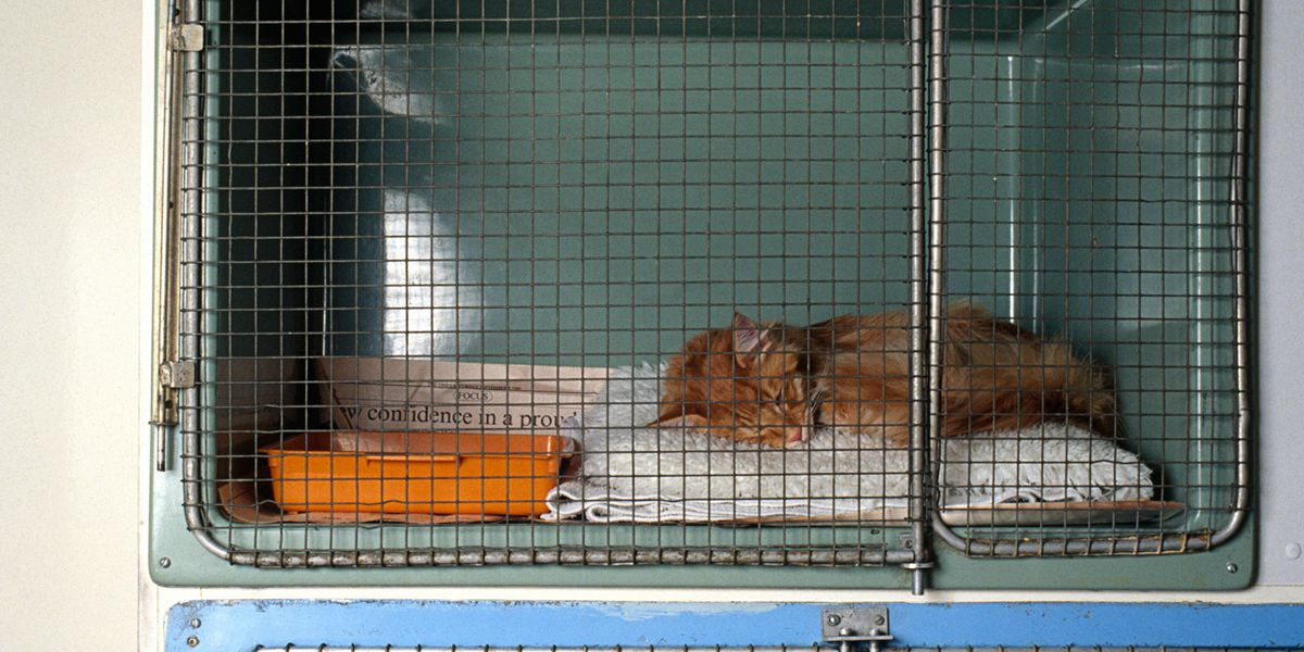 Quilty the cat helps break other cats out of kitty jail, gets solitary confinement