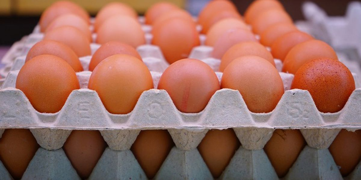 Georgia included in egg recall amid fears of salmonella contamination