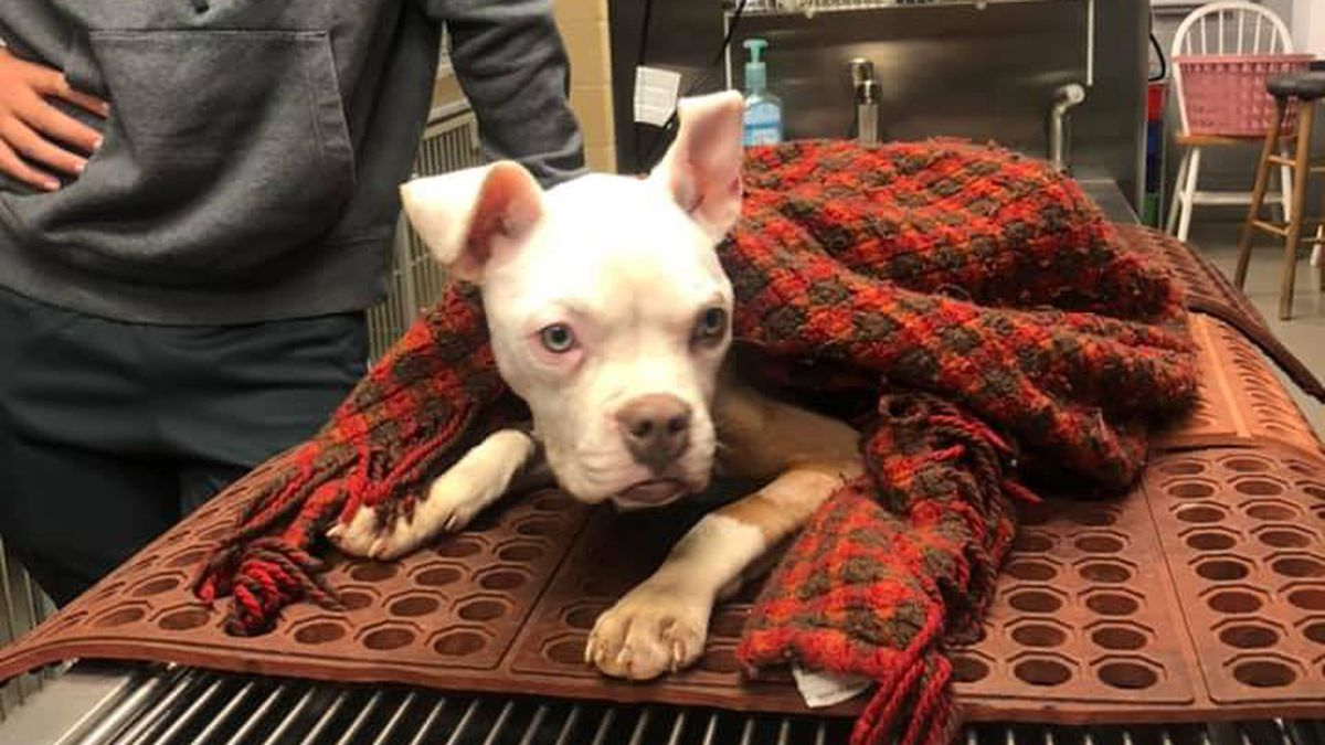 """Miracle"" dog survives being thrown into Georgia apartment dumpster on Christmas"