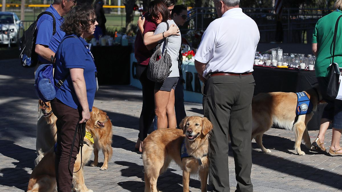 Marjory Stoneman Douglas High School therapy dogs get recognition in yearbook