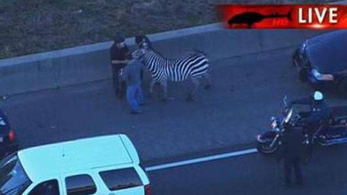 Top 4 most exotic animals spotted roaming metro Atlanta