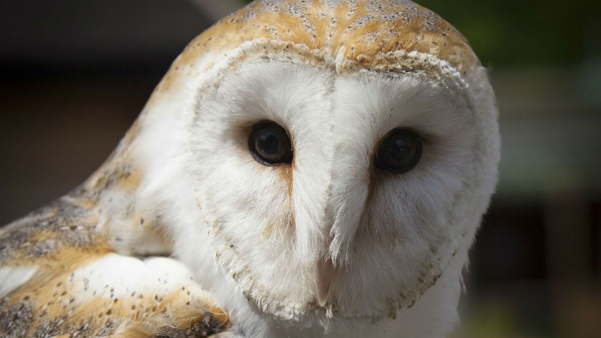 Owl found in jet turbine during preflight check