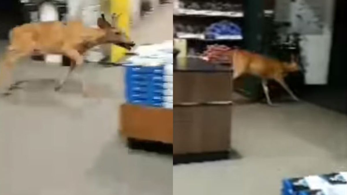 Deer caught on camera running through store at New York mall (VIDEO)
