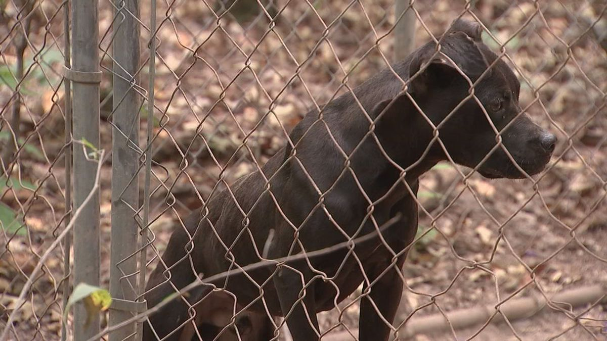 Man gets 15 years for one of the worst cases of animal cruelty in state history