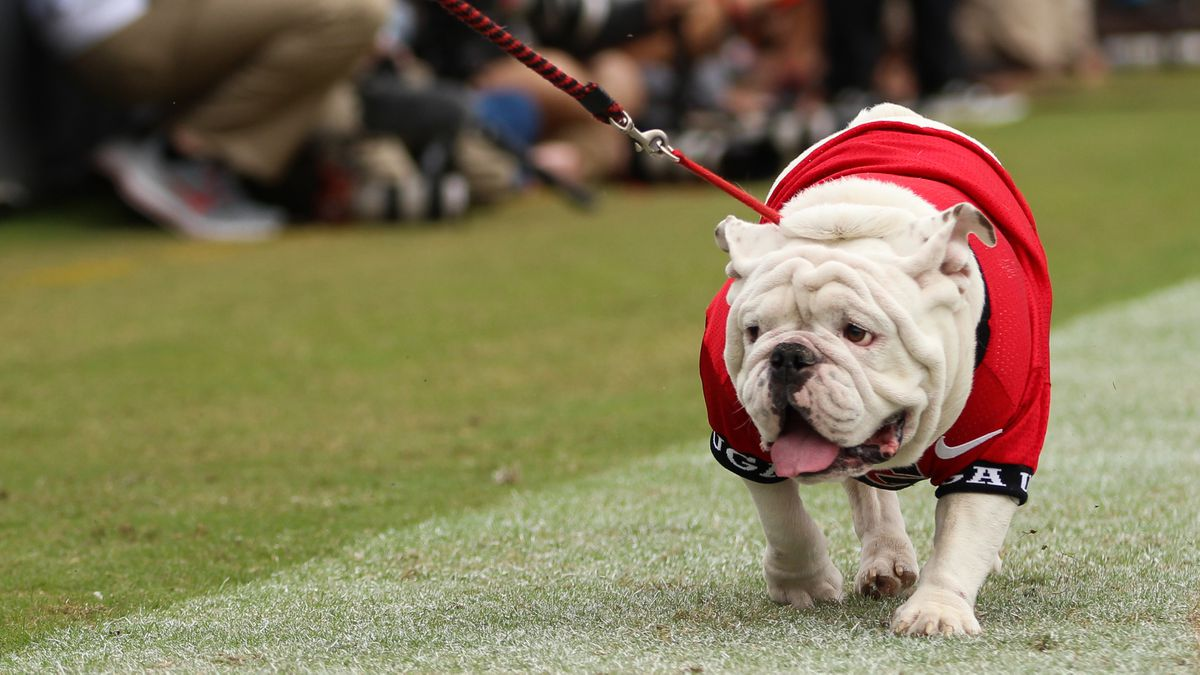 Once again, Uga is declared college football's top mascot